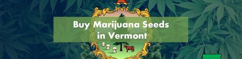 Buy Marijuana Seeds in Vermont Featured Image