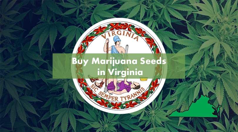 Buy Marijuana Seeds in Virginia Cover Photo