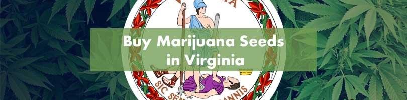 Buy Marijuana Seeds in Virginia Featured Image