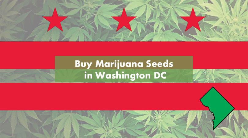 Buy Marijuana Seeds in Washington DC Cover Photo