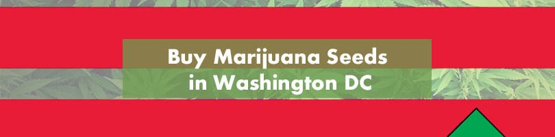 Buy Marijuana Seeds in Washington DC Featured Image