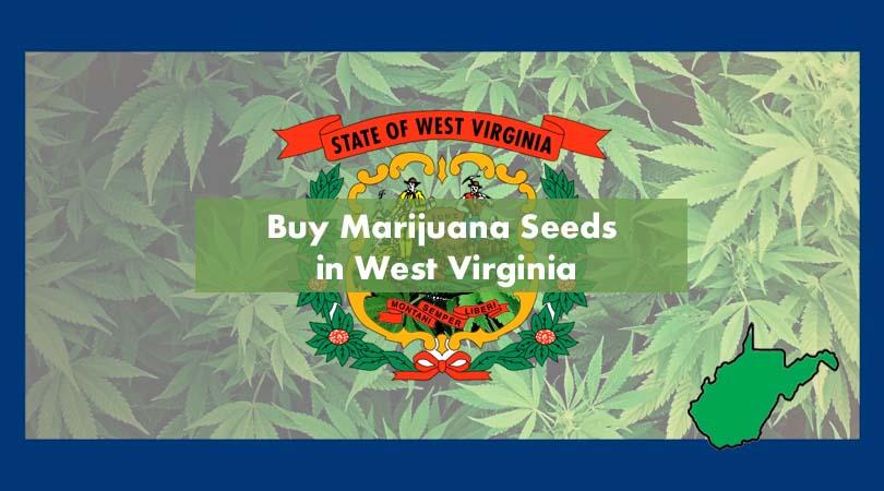 Buy Marijuana Seeds in West Virginia Cover Photo