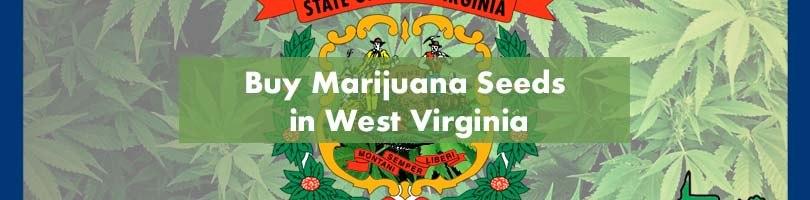 Buy Marijuana Seeds in West Virginia Featured Image