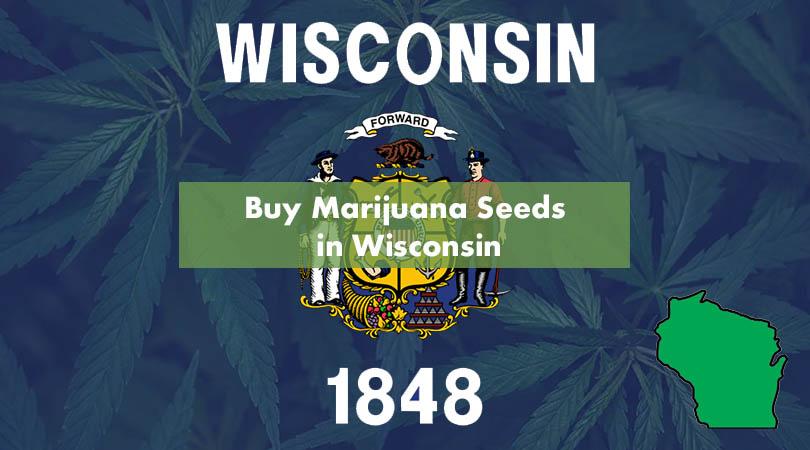 Buy Marijuana Seeds in Wisconsin Cover Photo