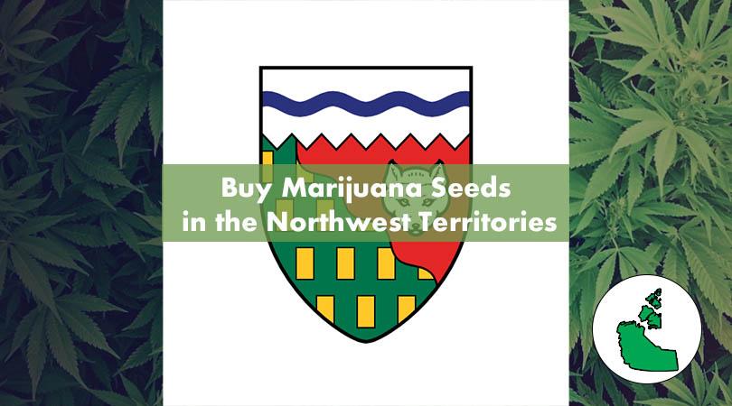 Buy Marijuana Seeds in the Northwest Territories Cover Photo