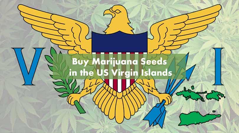 Buy Marijuana Seeds in the US Virgin Islands Cover Photo