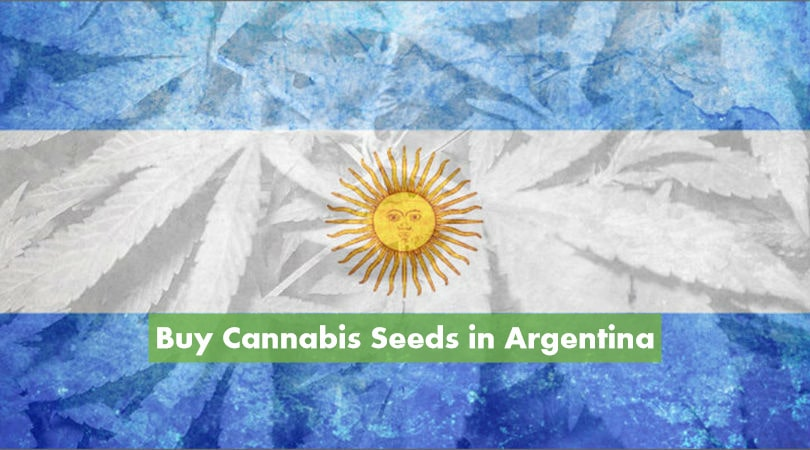 Buy Cannabis Seeds in Argentina