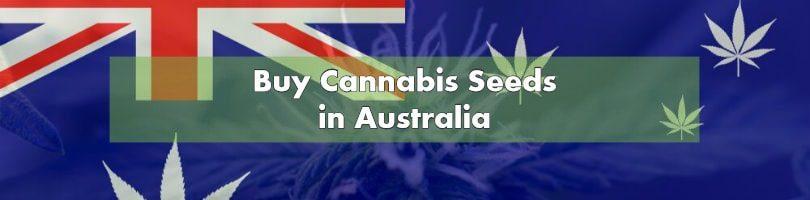 Buying Marijuana Seeds in Australia 2019 | 10Buds