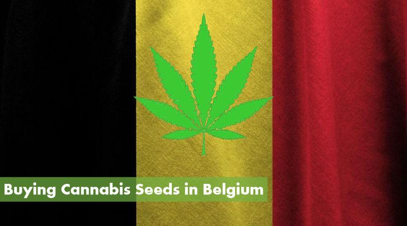 Buy Cannabis Seeds in Belgium