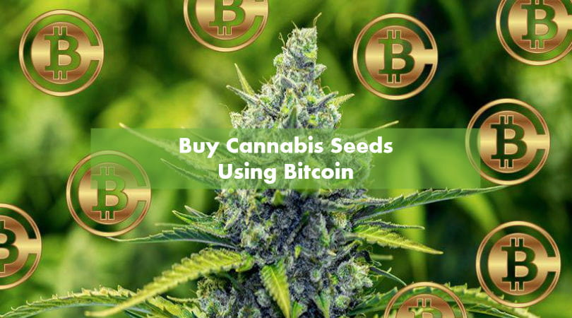 How To Stay Anonymous When Buying Marijuana Seeds Using Bitcoin