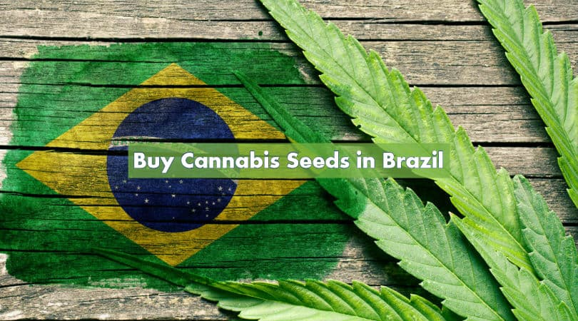 Buy Cannabis Seeds in Brazil