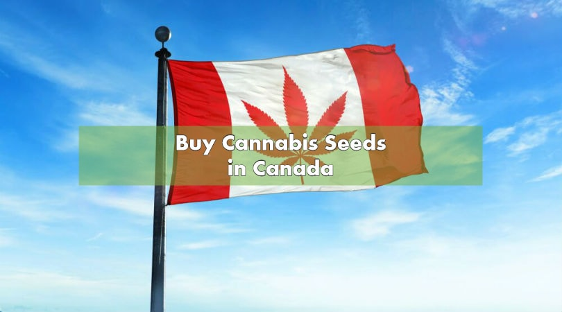 Buy Cannabis Seeds in Canada