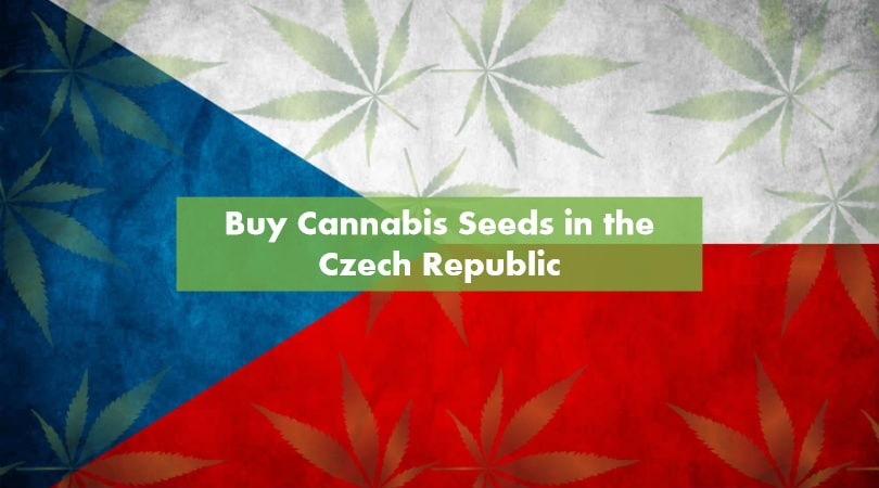 Buying Cannabis Seeds in the Czech Republic
