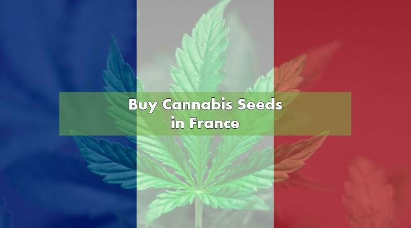 Buy Cannabis Seeds in France