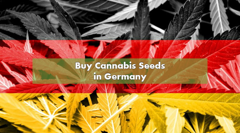 Buy Cannabis Seeds in Germany
