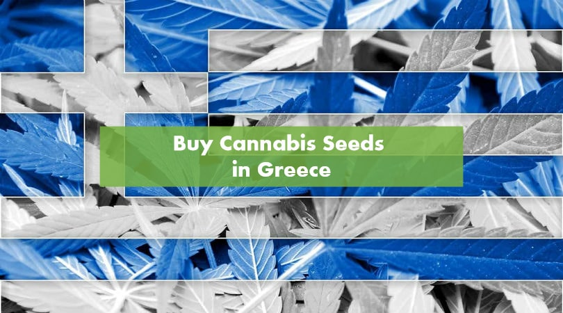 Buying Cannabis Seeds in Greece