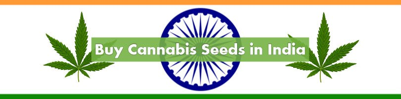 Buy Cannabis Seeds in India