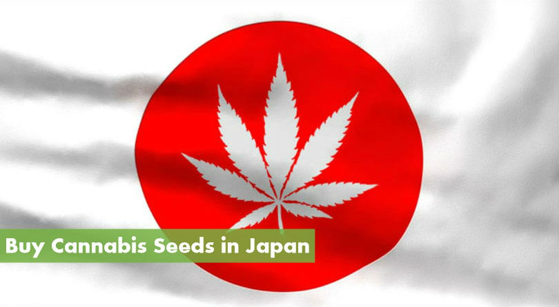 Buying Cannabis Seeds in Japan