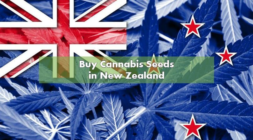 Buy Cannabis Seeds in New Zealand