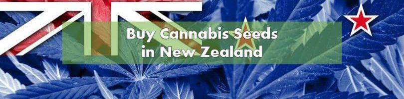 Buying Marijuana Seeds in New Zealand 2019 | 10Buds