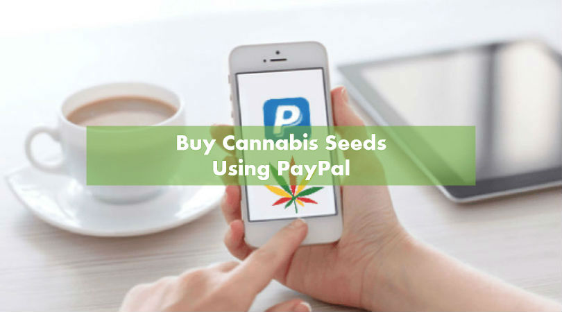 Buying Marijuana Seeds with PayPal
