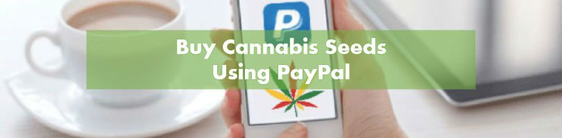 Buying Marijuana Seeds with PayPal | 10Buds Cannabis Growing Guide