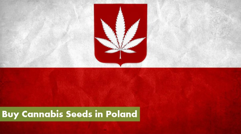 Buy Cannabis Seeds in Poland