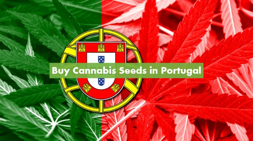 Buy Cannabis Seeds in Portugal