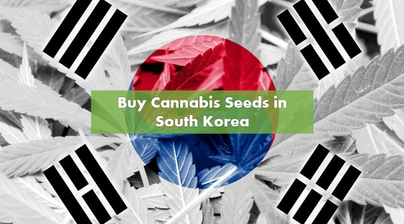 Buying Cannabis Seeds in South Korea