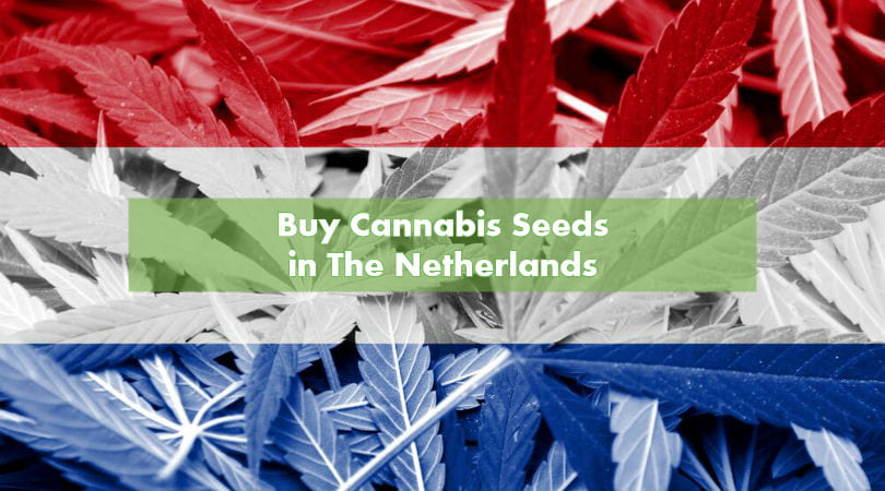 Buy Cannabis Seeds in The Netherlands