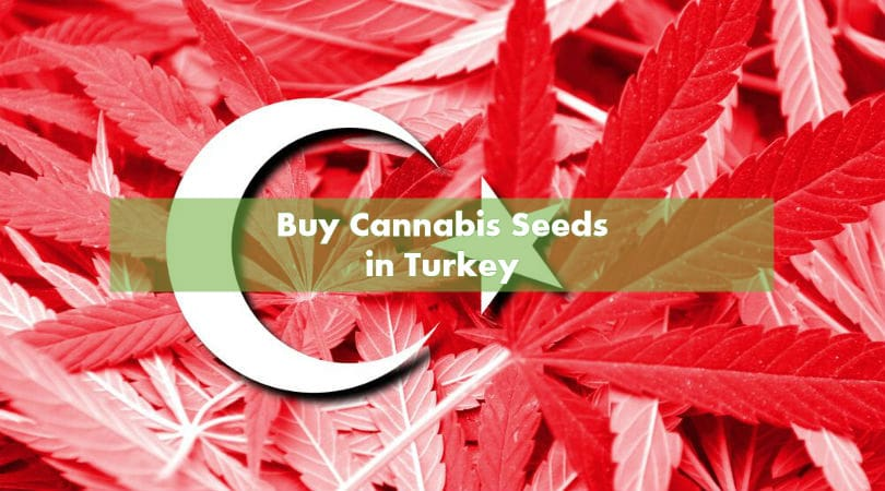 Buy Cannabis Seeds in Turkey
