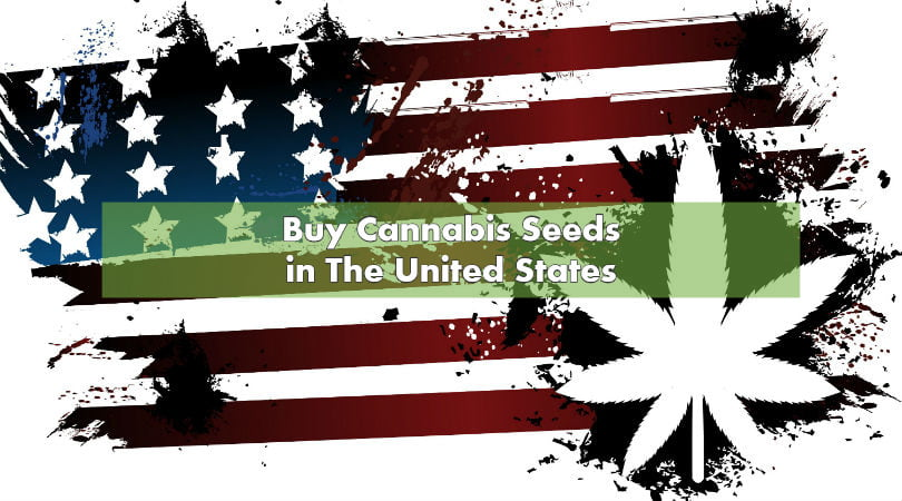 Buy Cannabis Seeds in The United States