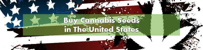Buying Marijuana Seeds in United States 2019 | 10Buds