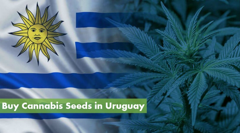 Buying Cannabis Seeds in Uruguay