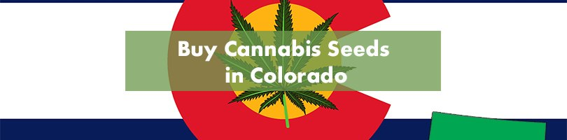 Buying Cannabis Seeds in Colorado Cover Photo Featured Image