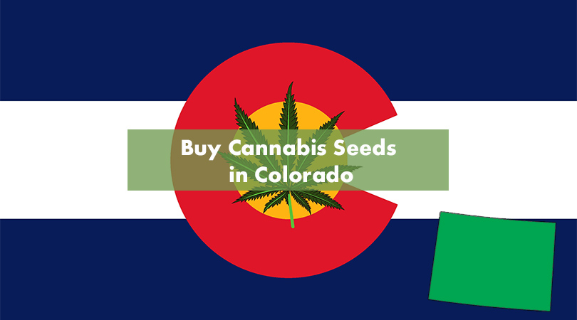 Buying Cannabis Seeds in Colorado Cover Photo