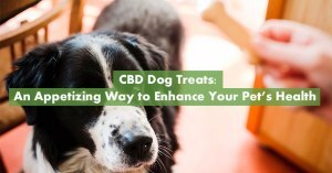 CBD For Dogs Featured Image