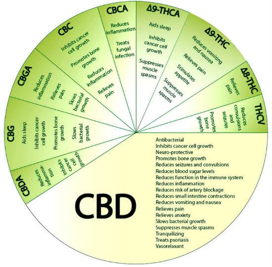 Cannabinoids Benefits Circle