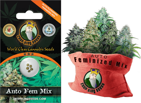 Crop King Seeds Auto Feminized Mix Pack