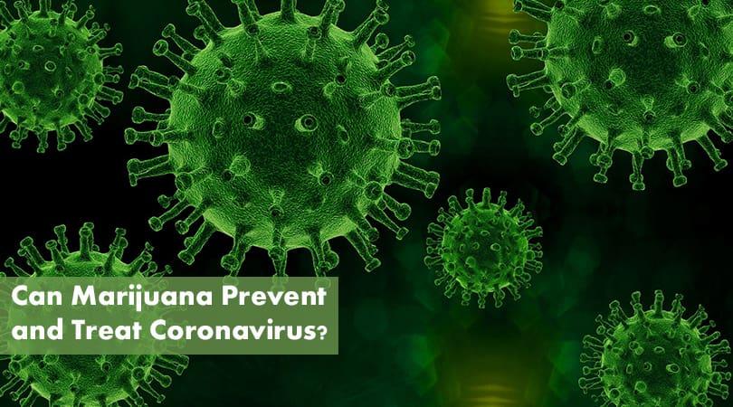 Can Marijuana Prevent and Treat Coronavirus Cover Photo