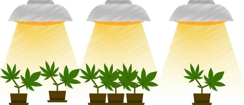 Cannabis Grow Light Footprint