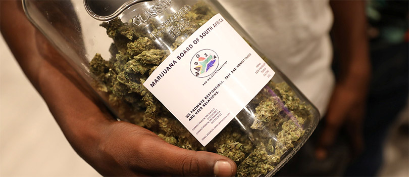Cannabis Grown in South Africa