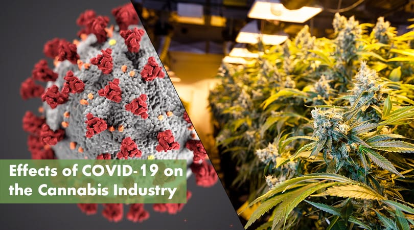 Cannabis Industry COVID-19 Cover Photo