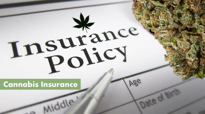 Cannabis Insurance Cover Photo