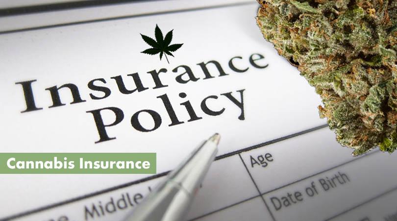 Cannabis Insurance Cover Photo