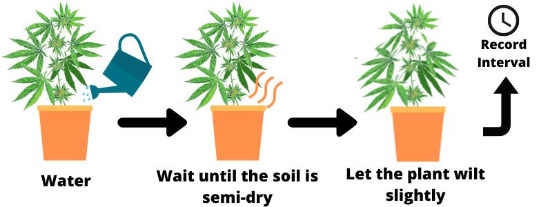 Cannabis Irrigation Intervals