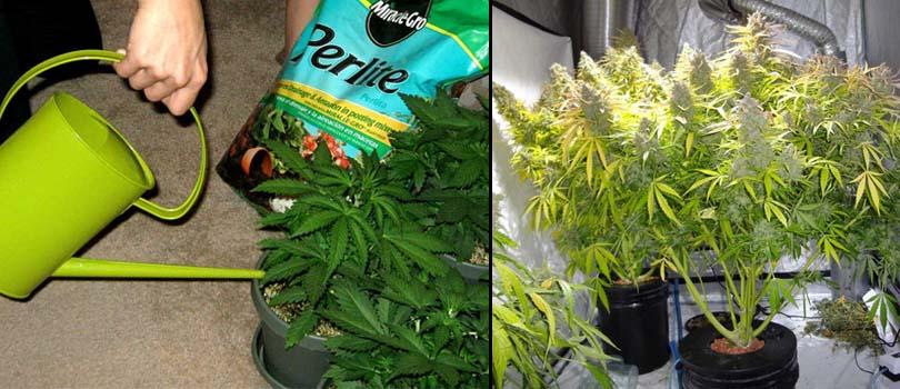 Cannabis Irrigaton Techniques