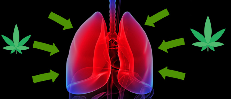 Cannabis Reduces Lung Inflammation