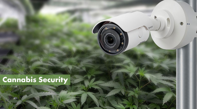 Cannabis Security Cover Photo