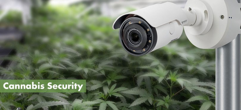 Cannabis Security Featured Image
